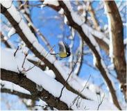 Vliegende mees op de winterboom Stock Afbeelding