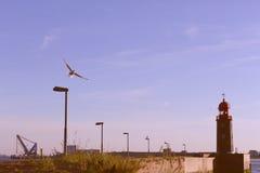 Vliegende meeuw Royalty-vrije Stock Foto
