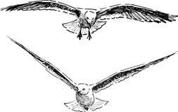 Vliegende meeuwen Stock Foto's