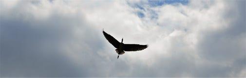 Vliegende reiger boven Zwolle Royalty-vrije Stock Afbeeldingen