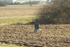 Vliegende reigerkraan boven het gebied stock foto