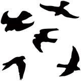 Vliegende valk royalty-vrije illustratie