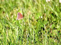 Vliegende vlinder Royalty-vrije Stock Afbeelding