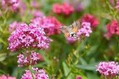 Vliegende vlinder Stock Fotografie