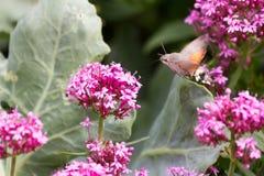 Vliegende vlinder Stock Foto