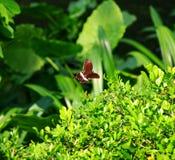 Vliegende vlinder over installaties in de de zomertuin Stock Afbeeldingen