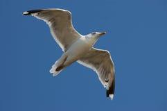 Vliegende vogel Stock Foto