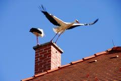 Vliegende vogel Royalty-vrije Stock Foto