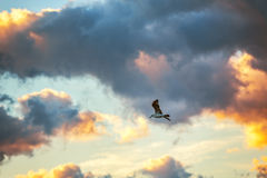 Vliegende vogel in de blauwe Hemel Royalty-vrije Stock Foto