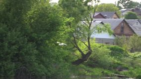 Vliegende vogel op de achtergrond van groen bos, longshot stock videobeelden