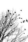 Vliegende vogels Stock Afbeeldingen