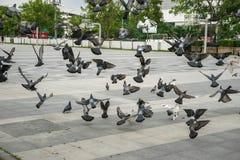 Vliegende vogels Royalty-vrije Stock Foto