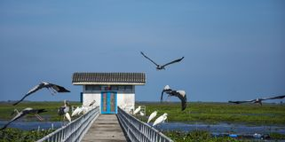 Vliegende vogels bij het meer Phatthalung Thailand van thalenoi stock fotografie
