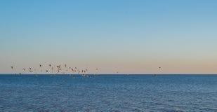 Vliegende vogels boven het water - vreedzame avondkust Royalty-vrije Stock Afbeeldingen