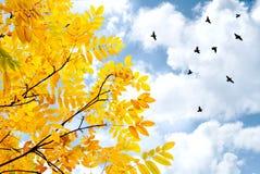 Vliegende vogels en boom Royalty-vrije Stock Afbeeldingen