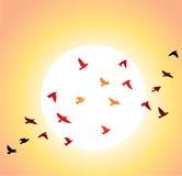 Vliegende vogels en heldere zon Royalty-vrije Stock Fotografie