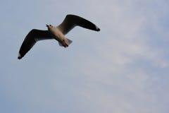 Vliegende vogels en hemelsamenvatting De vogels van vrijheid Royalty-vrije Stock Afbeeldingen