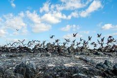 Vliegende vogels op het strand Stock Afbeeldingen