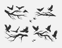 Vliegende vogels, opgezet op takken Royalty-vrije Stock Afbeeldingen