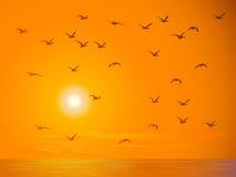 Vliegende vogels tegen oranje zonsondergang. Stock Afbeelding