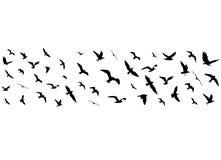 Vliegende vogelssilhouetten op witte achtergrond Stock Afbeeldingen