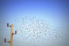 Vliegende vogelstroep stock foto's