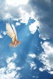 Vliegende witte duif die op blauw wordt geïsoleerd royalty-vrije stock foto