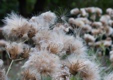 Vliegende zaden Royalty-vrije Stock Foto