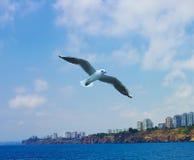 Vliegende zeemeeuw in de hemel boven de Middellandse Zee in Antalya Royalty-vrije Stock Foto's