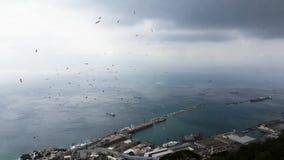 Vliegende zeemeeuw en lanscape in Gibraltar stock footage