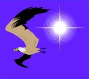 Vliegende zeemeeuw in hemel met heldere zon Stock Foto