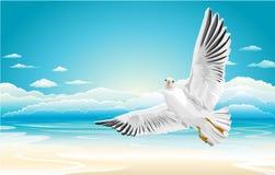 Vliegende zeemeeuw op Strand Stock Afbeeldingen