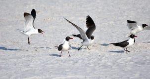 Vliegende zeemeeuwen bij het strand Stock Foto's