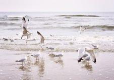 Vliegende zeemeeuwen bij het strand Stock Afbeelding