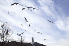 Vliegende zeemeeuwen in blauwe hemel Royalty-vrije Stock Afbeelding
