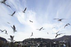 Vliegende zeemeeuwen in blauwe hemel Royalty-vrije Stock Foto's