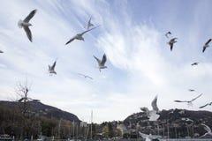 Vliegende zeemeeuwen in blauwe hemel Stock Fotografie
