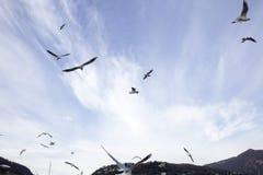 Vliegende zeemeeuwen in blauwe hemel Stock Foto's