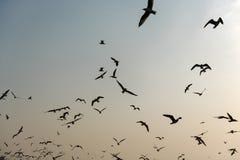 Vliegende Zeemeeuwen dichtbij Mangrove Forest Natural Stock Afbeeldingen