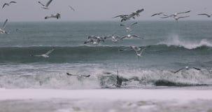 Vliegende zeemeeuwen over de winteroverzees en reusachtige golven stock footage