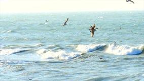 Vliegende zeemeeuwen over oppervlakte van het overzees stock video