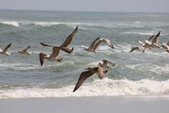 Vliegende zeemeeuwen tegen de achtergrond van het overzees stock foto's