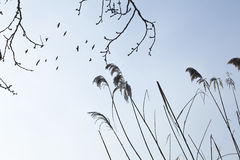 Vliegende zwarte vogels Stock Foto's