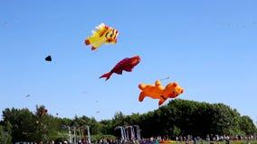 Vliegers die in de hemel vliegen stock video