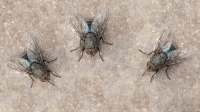 Vlieginsect royalty-vrije stock foto's