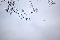 Vliegtuig die over vliegen stock foto