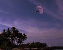 Vliegtuig over tropisch eiland Stock Afbeeldingen