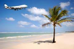 Vliegtuig en palm op strand Royalty-vrije Stock Afbeelding