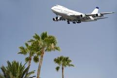 Vliegtuig en palmen Royalty-vrije Stock Foto's