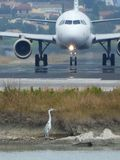 Vliegtuig en reiger Stock Foto